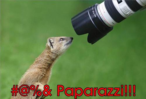 Fucking paparazzi