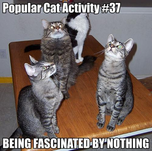 cat_activity2-1