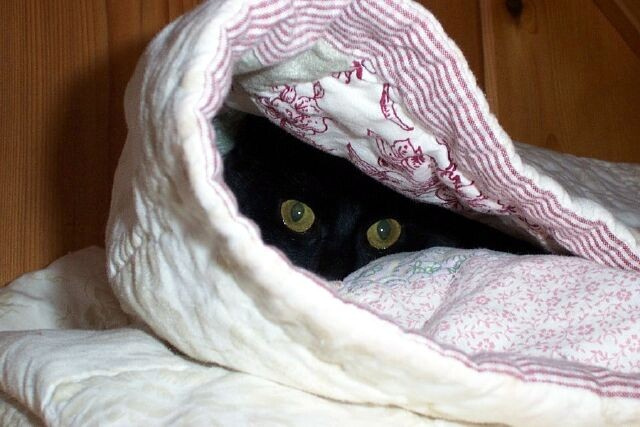 cat-in-blanket-2