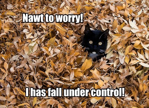 cat-in-leaves