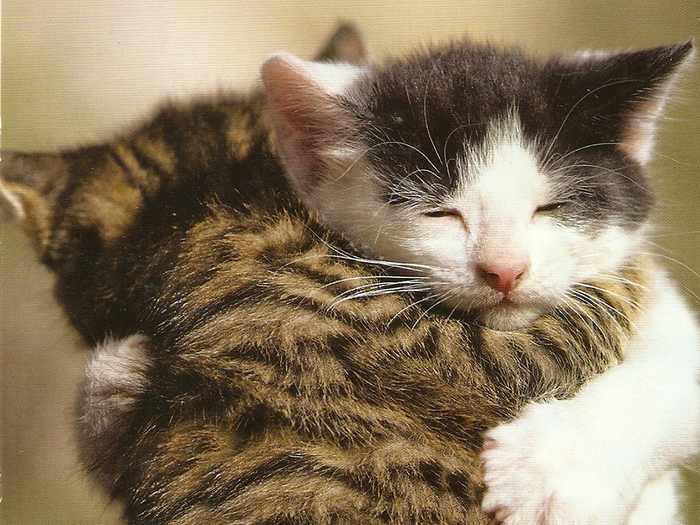 Cats hugging Edit