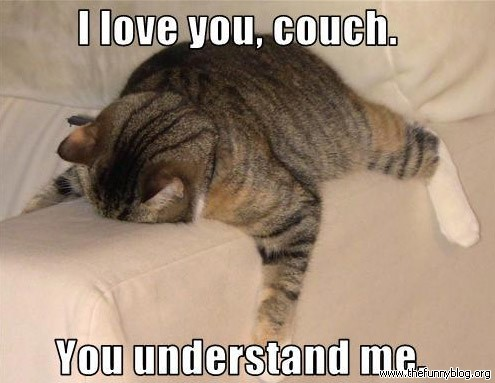 Couch cat