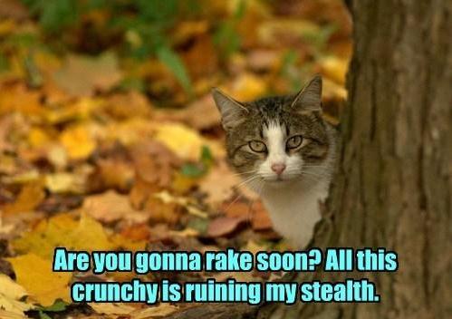 Gonna rake soon