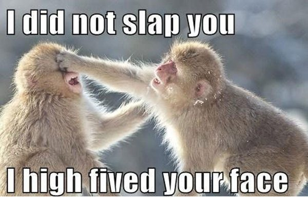 High five face monkeys
