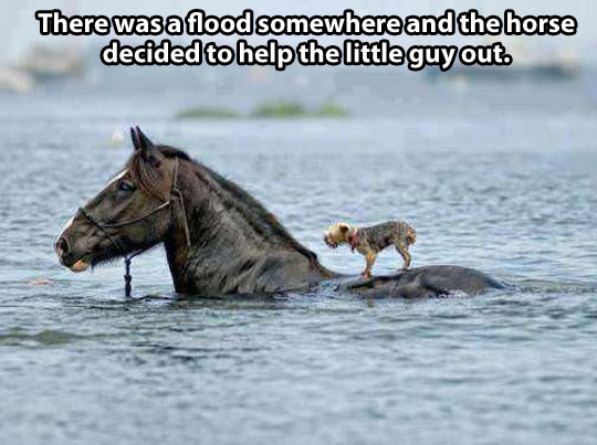Horse saving dog