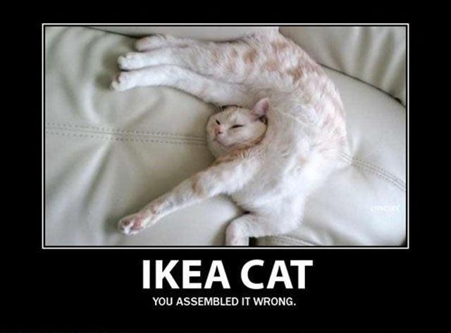 Ikea cat