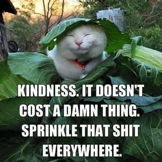 Kindness cat