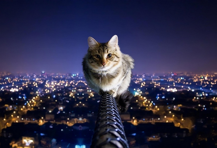 Night cat on wire edit