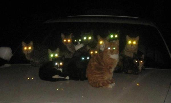 Night cats demon eyes