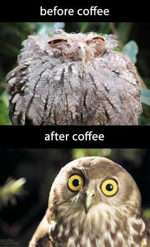 Owl coffee funny