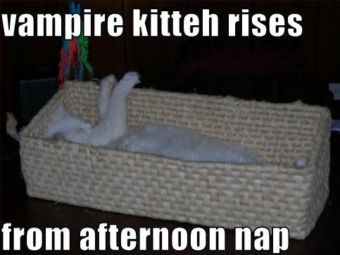 Vampire-cat-rises-from-nap1