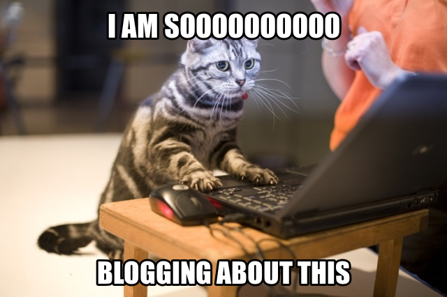 blogging-cat-meme